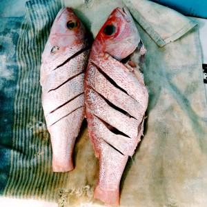 freshly caught piska kora