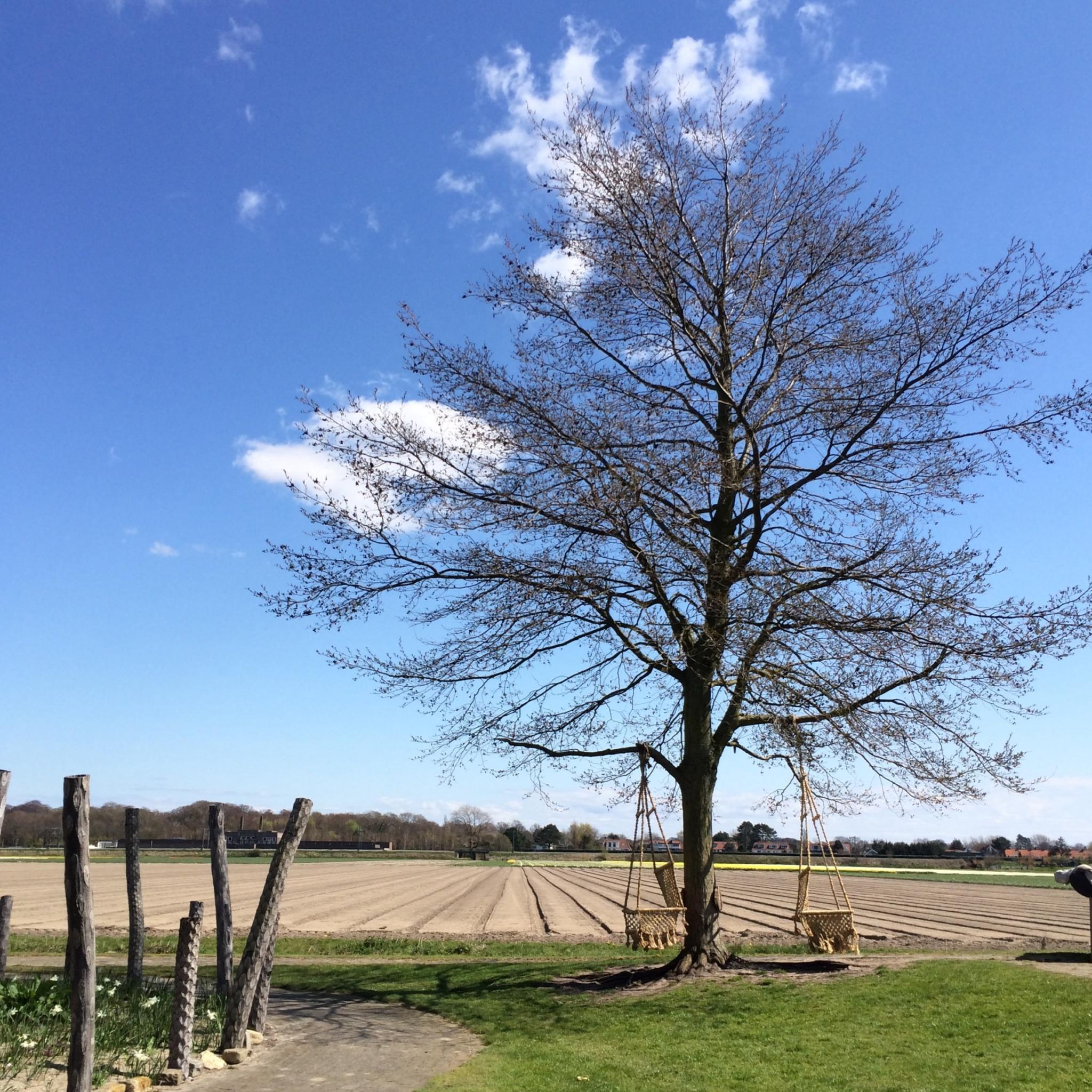 IMG 8525 - Buitenplaats Plantage in Vogelenzang