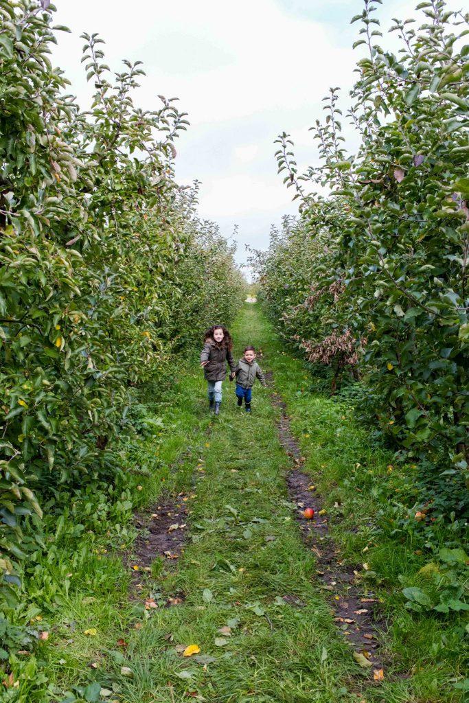 olmenhorst culinessa 1 683x1024 - Appels plukken bij landgoed de Olmenhorst