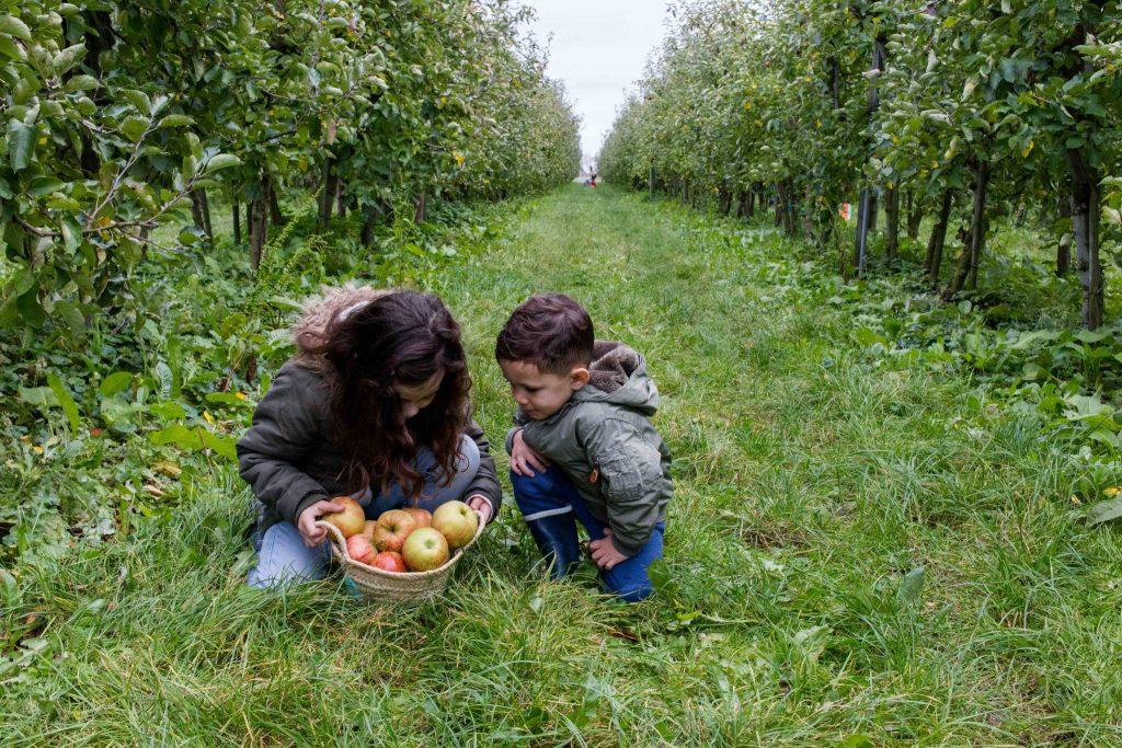 olmenhorst culinessa 2 1024x683 - Appels plukken bij landgoed de Olmenhorst
