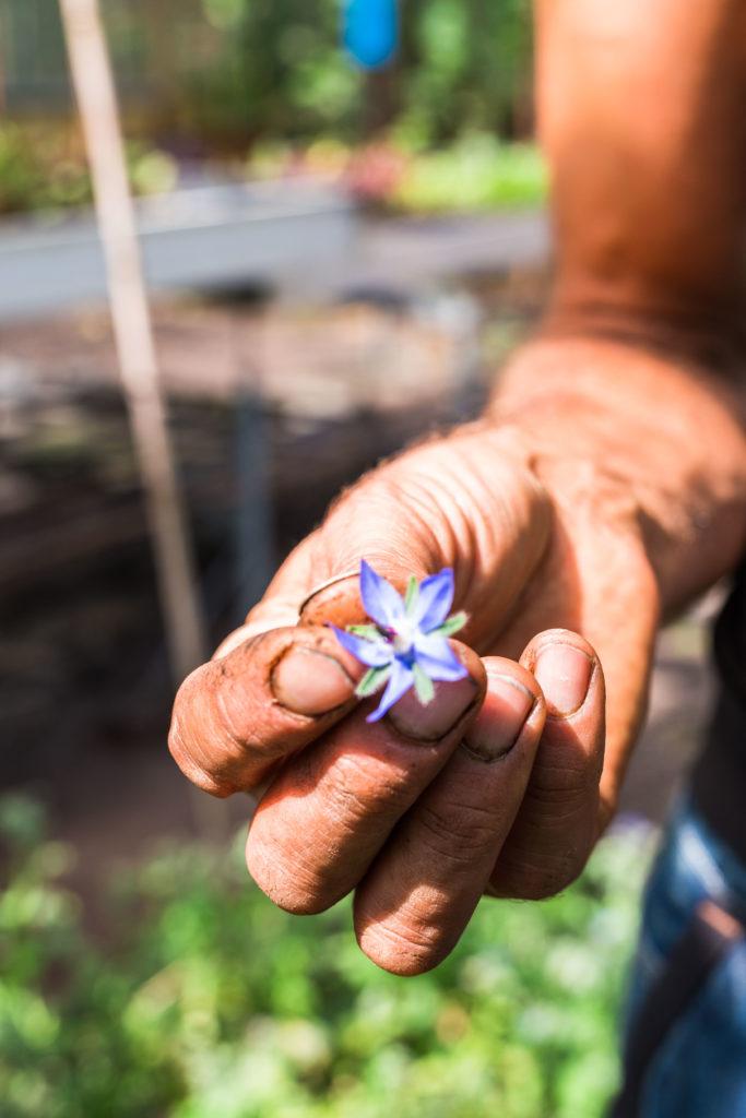 oosgst oogst eetbare bloemen